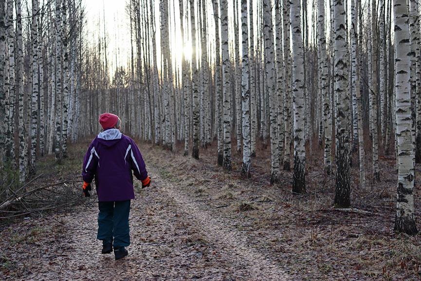 Inkeri Lehtinen - Puista vapaa sähkölinja